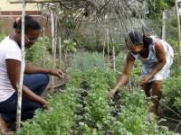 Edital emergencial de R$ 15 milhões beneficia agricultores familiares.