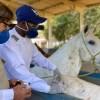 Brasileiros descobrem que anticorpo de cavalos contra a Covid é até 50 vezes mais potente.