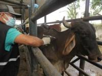 Bahia deve vacinar mais de 10 mi de animais contra a aftosa até o final de maio.