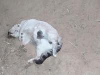 Gatos foram encontrados envenenados em Guanambi.