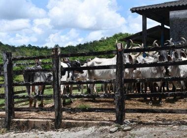 Produtores baianos têm até junho para fazer recadastramento de produção rural.