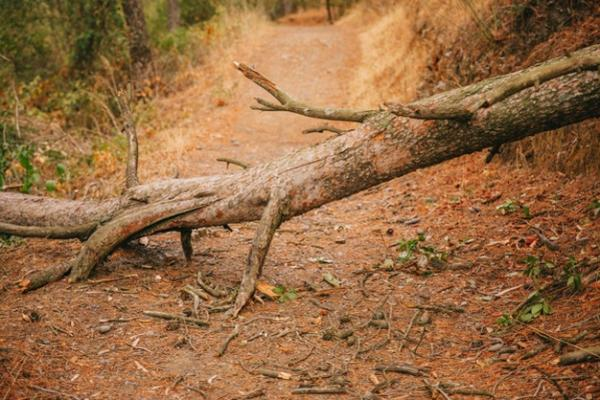 Homem morre após ser atingido por tronco de árvore na zona rural de Caetité.