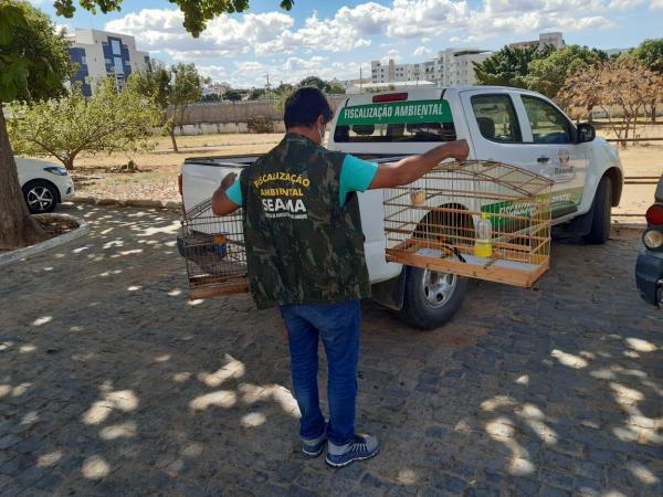 Secretaria de Agricultura e Meio Ambiente recebe entrega voluntária de pássaros silvestres.